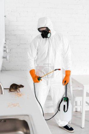 Kammerjäger mit Giftspray und Blick auf Ratte in Erbsennähe auf dem Tisch