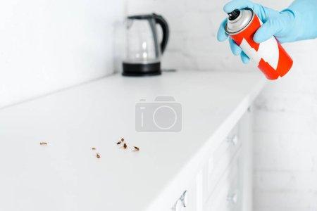 Photo pour Vue recadrée de l'exterminateur tenant pulvérisation peut près des cafards - image libre de droit