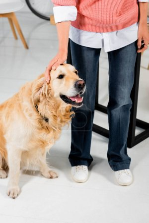 Photo for Cropped view of woman stroking cute golden retriever in office - Royalty Free Image
