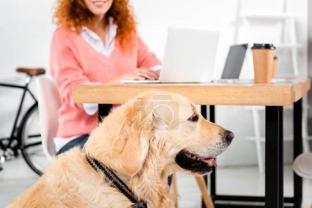 Photo for Selective focus of cute golden retriever near table in office - Royalty Free Image
