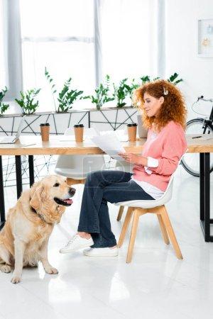 Photo pour Femme attirante dans le chandail rose faisant la paperasse et le retriever d'or s'asseyant sur l'étage dans le bureau - image libre de droit