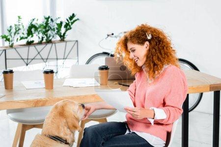 Photo pour Femme attirante et souriante dans le chandail rose alimentant le golden retriever dans le bureau - image libre de droit