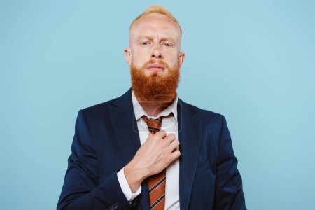 Photo for Confident bearded businessman in suit correcting tie, isolated on blue - Royalty Free Image