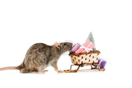 Photo pour Traîneau de rat et d'osier avec cadeaux de Noël et arbre de Noël sur fond blanc - image libre de droit