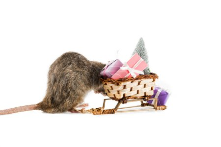 rat and wicker sled with christmas gifts and christmas tree on white background