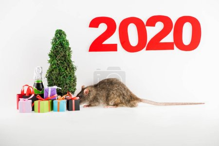 Photo pour Numbers 2020, rat, christmas gifts, bottle near christmas tree on white background - image libre de droit