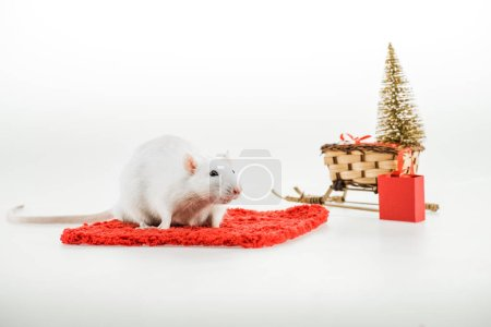 Photo pour Rat on red carpet and wicker sled with christmas tree in New Year - image libre de droit