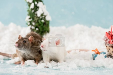 Photo for Cute rats and christmas gift boxes on snow in New Year - Royalty Free Image