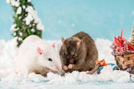 Foto de Cute rats and wicker sled with gift boxes in New Year - Imagen libre de derechos