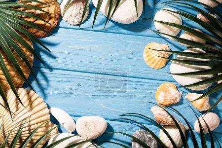 Photo pour Vue de dessus des coquillages et des feuilles de palmier sur fond bleu bois - image libre de droit