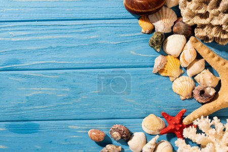 Photo for Top view of seashells, starfishes and coral on wooden blue background - Royalty Free Image