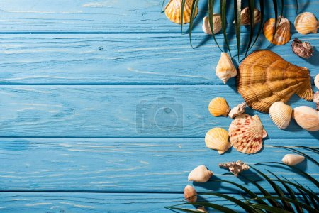 Photo for Top view of seashells and palm leaves on wooden blue background - Royalty Free Image