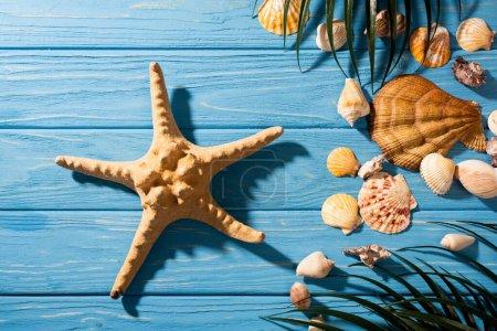 Photo pour Vue de dessus des étoiles de mer, des coquillages et des feuilles de palmier sur fond bleu bois - image libre de droit