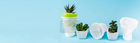 Photo for Green succulent plants in flowerpots near crumpled plastic cups on blue background, panoramic shot - Royalty Free Image