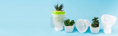 Photo pour Plantes succulentes vertes dans des pots de fleurs près de gobelets en plastique froissés sur fond bleu, vue panoramique - image libre de droit