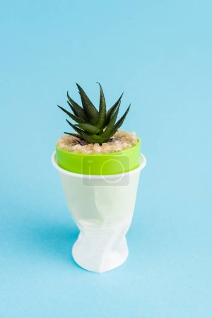 green succulent plant in crumpled plastic cup on blue background