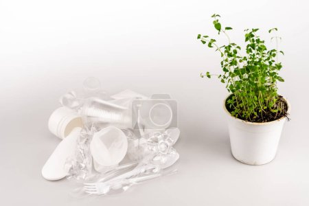 Photo for Green plant in flowerpot near crumpled plastic trash on white background - Royalty Free Image