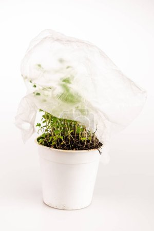 green plant covered with plastic bag on white background