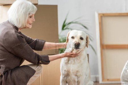 senior woman petting dog in new house with cardboard boxes on background
