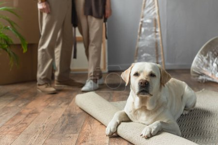 cropped view of senior couple standing in new house and labrador dog lying on carpet on foreground