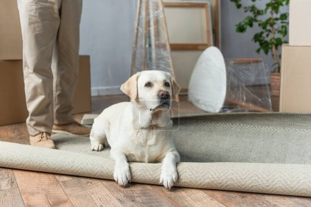 cropped view of man standing in new house and labrador dog lying on carpet on foreground