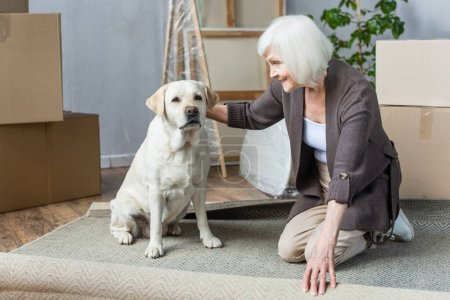 cheerful senior woman rolling carpet and petting dog