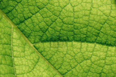 Photo for Macro texture of natural green leaf - Royalty Free Image