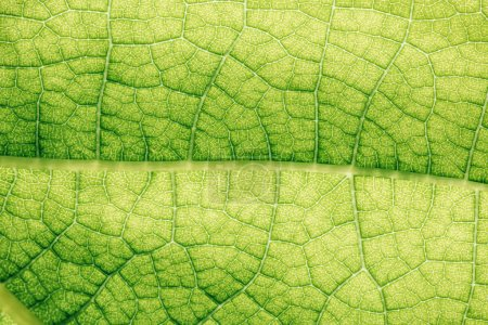 Photo for Macro texture of green floral leaf - Royalty Free Image