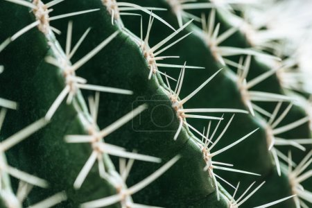 Photo for Macro view of green cactus with needles - Royalty Free Image