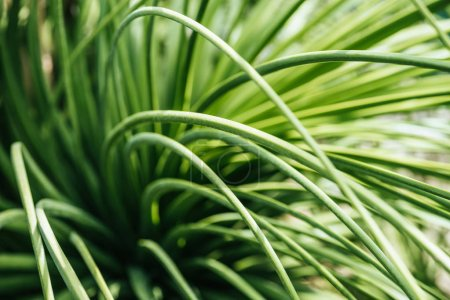 close up view of green grass in sunlight