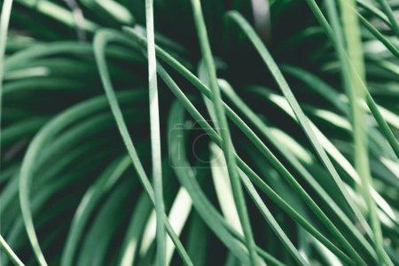 close up view of green seasonal grass