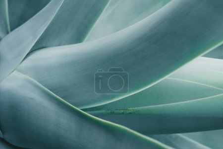 Photo for Close up background with blue aloe plant - Royalty Free Image