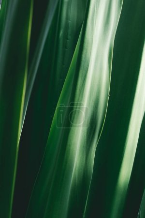 Photo for Macro view of green fresh grass - Royalty Free Image