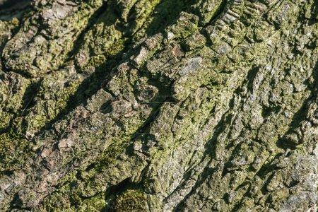 close up texture of grey tree bark
