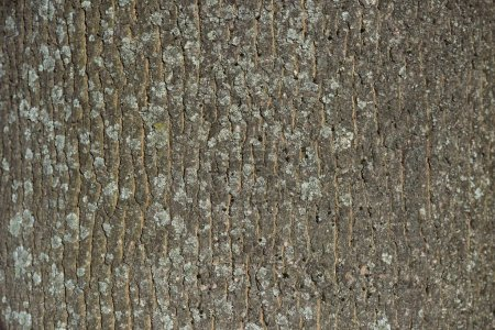 horizontal texture of dry tree bark