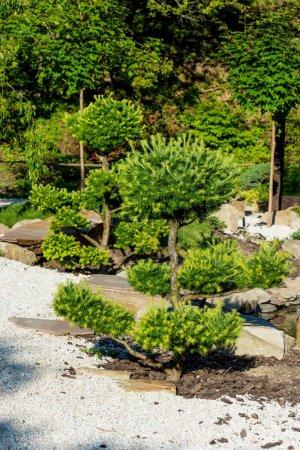 green coniferous trees growing on rocks in summer