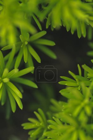 Dark floral background with green plant leaves