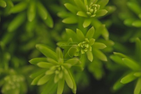 Close-up view of tiny green plant leaves