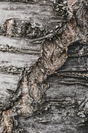 Textured tree bark with fractures and cracks