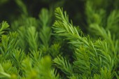 Texture of green plant branches and leaves