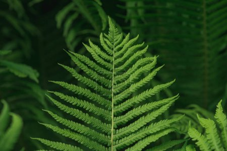 Photo for Lush green background with large fern leaf - Royalty Free Image