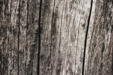 Dry wood with texture with cracks background