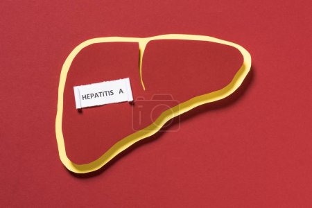 top view of liver and lettering hepatitis a on red background, world hepatitis day concept