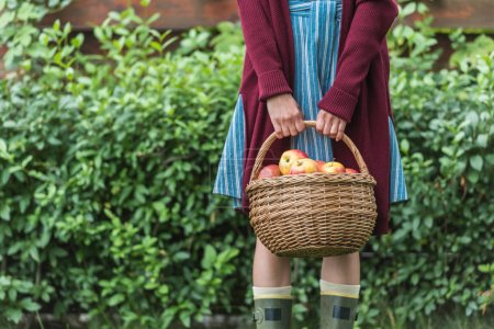 midsection view of young woman holding wicker basket with apples