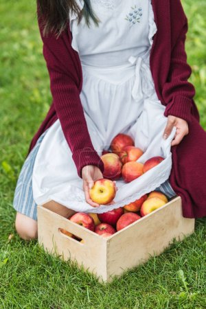 cropped view of girl putting apples from apron into wooden box