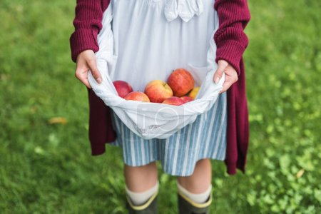 Photo for Cropped view of girl holding apples in apron - Royalty Free Image