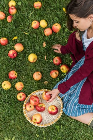 Photo for Overhead view of girl with fresh picked apples in wicker bowl sitting on green grass - Royalty Free Image