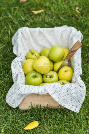 green fresh picked apples and knife in wooden box on grass
