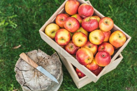 Photo for Top view of fresh picked apples in wooden boxes with knife on stump - Royalty Free Image