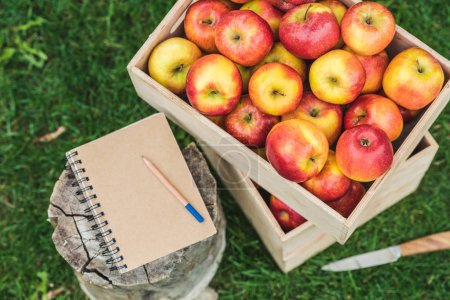 top view of notepad with pencil and fresh picked apples in boxes with for sale